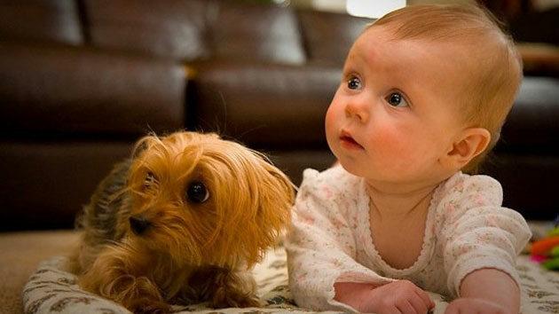 mascotas-para-nic3b1os-5966826