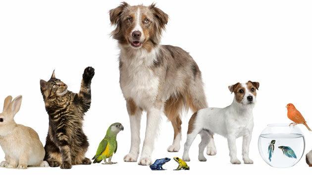 mascotas-para-nic3b1os-jpg1_-9173045