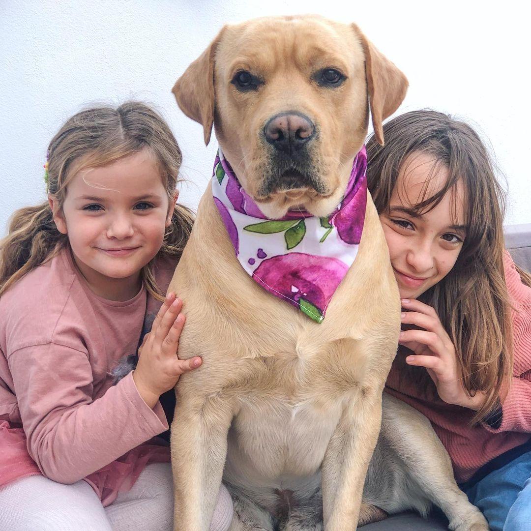 los-ninos-y-las-mascotas-5886337-jpg